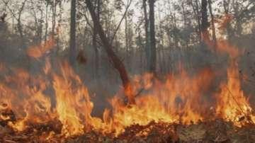 Пожарът край Златоград е локализиран. В гасенето участват и военни