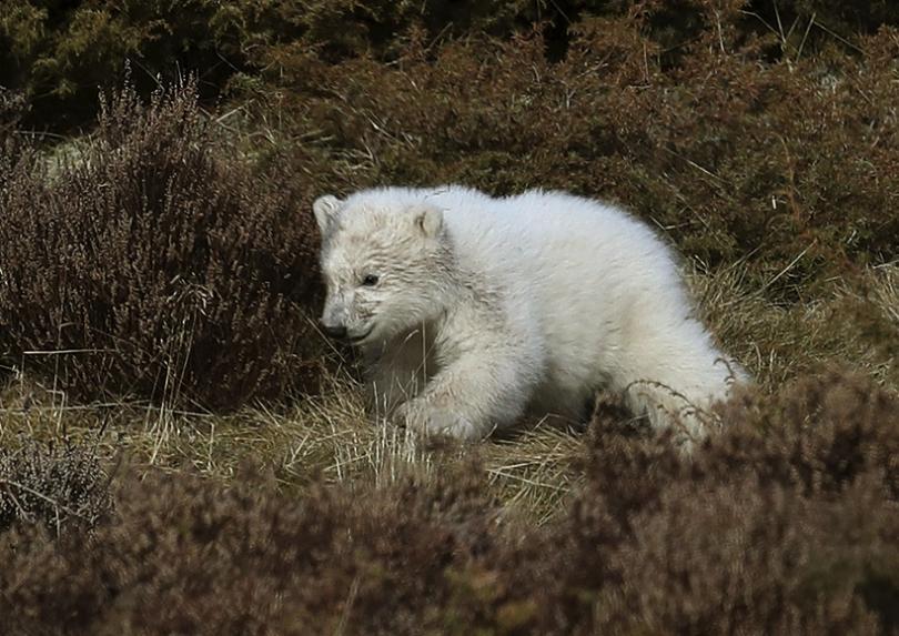 В зоопарк в Шотландия за първи път посетители успяха да