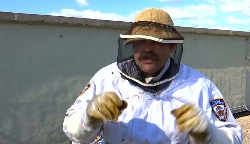 Жужене на пчели. Градски. Или по-скоро полицейски. Кошерът се намира