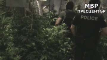 Разкриха супермодерна оранжерия за марихуана в Бургас