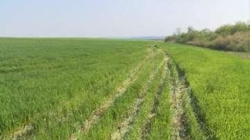 През просото - офроуд състезание повреди посеви край село Козаревец