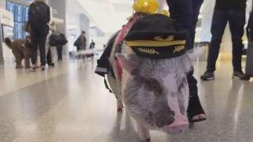 Прасе помага на пътниците на летището в Сан Франциско