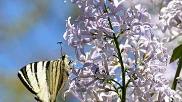 Пролетната умора може да се лекува със слънце и минерали