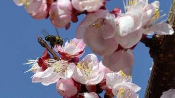 Масово изчезване на пчели във Великотърновско