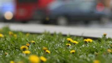 Температури между 13 и 18 градуса за Великден обещават синоптиците