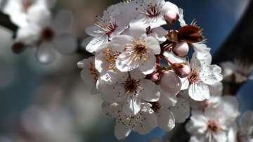Времето през март - очакват ни пролетни температури около 20-25 градуса
