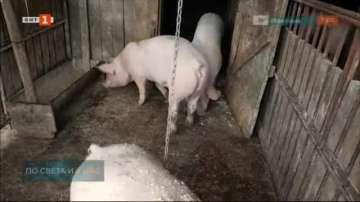 Еврокомисар: Има опасност България да загуби отрасъл свиневъдство