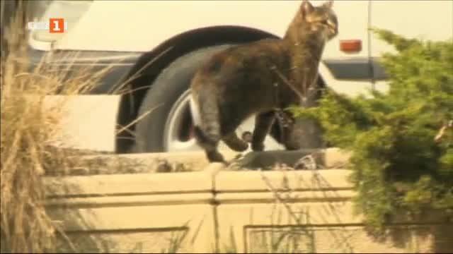 Бездомна котка от столичния квартал
