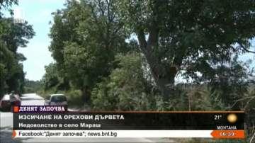Жители от село Мараш потърсиха БНТ, за да спрат изсичане на орехови дървета