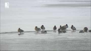 Производителите на патешко не са обезщетени заради птичия грип