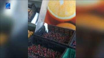 Видео на деня: Мишка краде череши