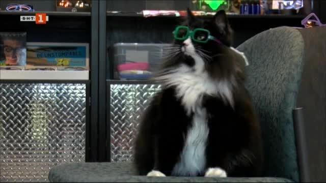 Снимка: Котка помага на деца да свикнат с носенето на очила