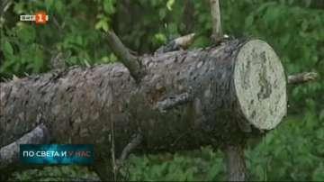 Незаконната сеч е сред най-честите нарушения в горските стопанства в Благоевград