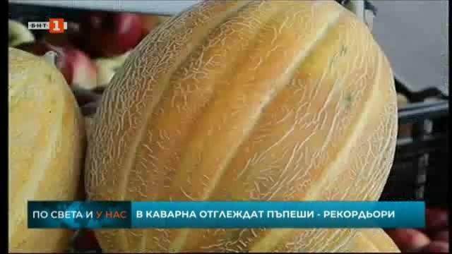 Земеделец от Каварна отгледа гигантски пъпеши с тегло близо 9