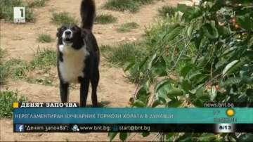 Жители на град Дунавци се оплакват от нерегламентиран приют за кучета
