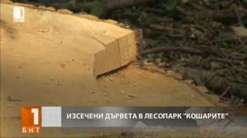 Изсичат десетки дървета в лесопарк Кошарите в София