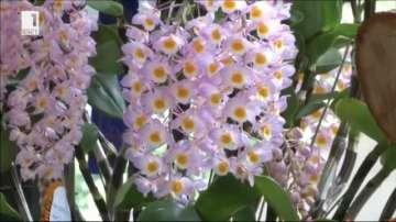 Изложение на орхидеи в Колумбия (ВИДЕО)
