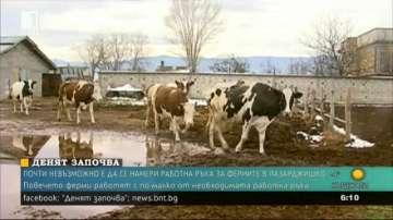 Няма желаещи да работят във фермите в Пазарджишка област
