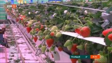 Как ще се отрази Брекзит на холандското земеделие?