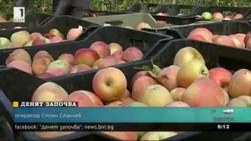 Земеделци: Вносът на ябълки убива родното производство