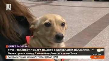 Куче терапевт помага на дете с церебрална парализа