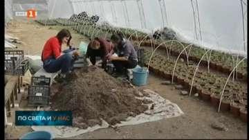 Младежи с интелектуални затруднения превърнаха пустеещ терен в градина