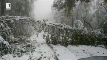 Снегът блокира за няколко часа пътя към Витоша