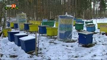 Тежка година изпращат русенските пчелари