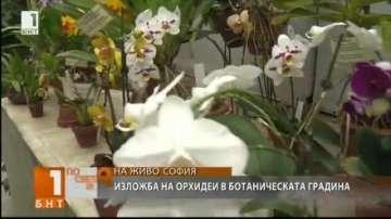 Около 60 вида орхидеи представя изложба в Ботаническата градина на БАН