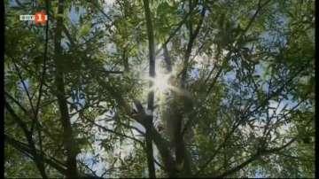 Възстановиха дървесни видове на дунавския остров Алеко