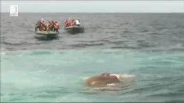 Военни спасиха слон от морето край Шри Ланка