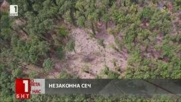 Незаконно изсечена гора край село Скравена