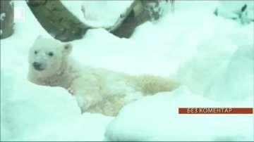 Обитателите на зоопарка в Орегон се радват на снега (ВИДЕО)