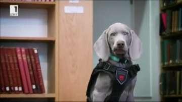 Куче ще работи в музей в Бостън