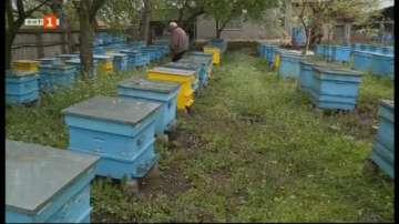 Пчелите от стотици кошери в Исперихско са измрели