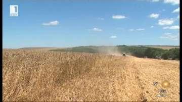 По-високи добиви и по-качествена пшеница в Добруджа