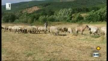 Животновъди са притеснени за прехраната на стадата си след пожара в Кресненско
