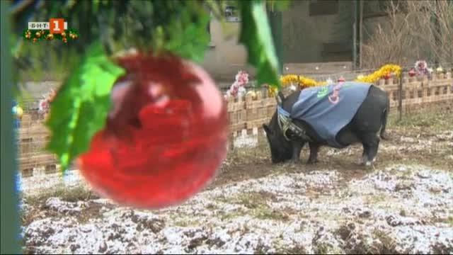 Коледен кът и в софийския зоопарк - две магаренца и