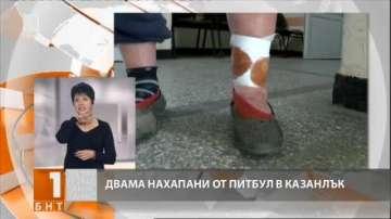 Домашни питбули нахапаха двама души в Казанлък