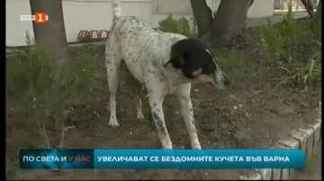 Нараства броят на бездомните кучета във Варна