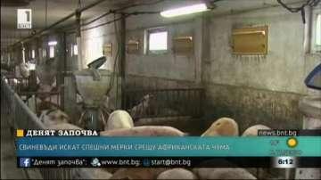 Свиневъди искат спешни мерки срещу африканската чума