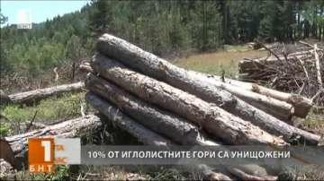 10% от иглолистните гори са унищожени