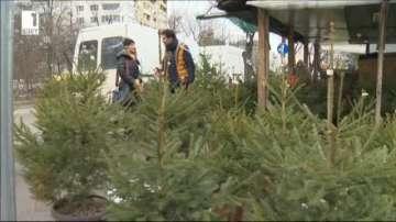 Как и къде да пресадим успешно елхичката след празниците?