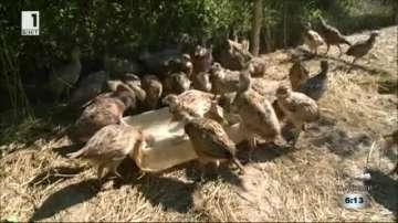 Русенските ловци ще разселят най-много фазани в страната