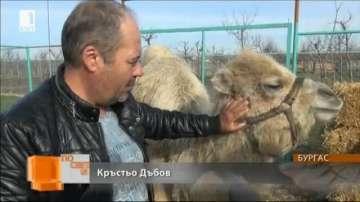Бургаският зоопарк има нов обитател