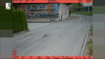 Хванаха патица с превишена скорост в Швейцария