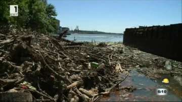 Дънери и клони пречат за почистването на река Дунав край Мартен
