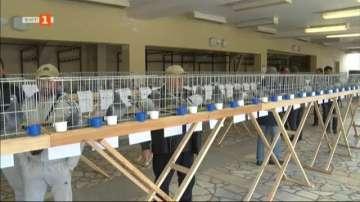 Изложба на спортни гълъби в Плевен