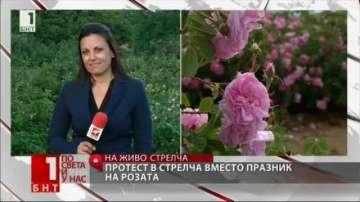 В Стрелча няма да празнуват празника на розата, вместо това протестират
