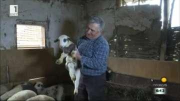 Агнешкото поскъпва три пъти по пътя от фермата до магазина